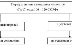Варианты уплаты и взыскания алиментов